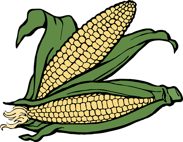 Post Photo for Waukon Corn Days is canceled for this year