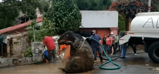 Post Photo for Crews find a giant rat prop in Mexico City's drainage system