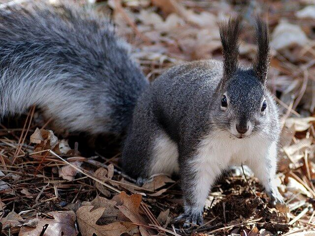 Post Photo for Multiple Squirrel Attacks in Queens, NY