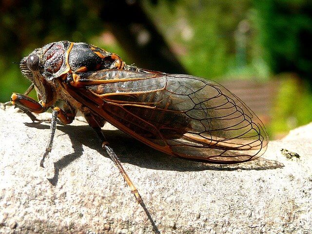 """Post Photo for People Keep Calling 911 About """"Alarms"""" That Are Actually Cicadas"""