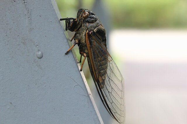 Post Photo for Cicadas: Brood X set to emerge