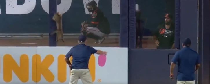 """Post Photo for The Yankees Struggled to Catch a Cat on the Field, and the Fans Gave It """"MVP!"""" Chants"""